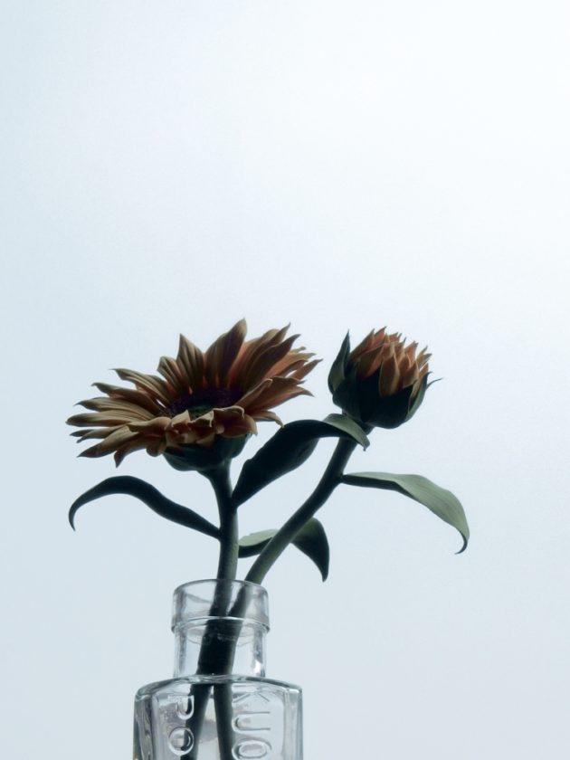 お空をバックに、クレイ向日葵